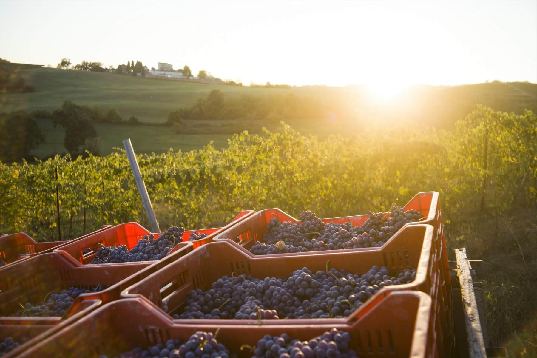 Maciot - Azienda Agricola Biodinamica - Cocconato - Asti - Vini Coconato (4)