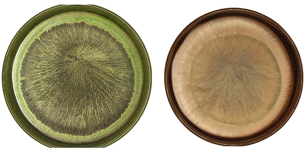 Maciot - Cristallizzazione vino - Biodinamica Cocconato - Asti - Vini Cocconato